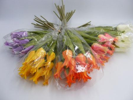 Tulipan pojedynczy liliokształtny (1)