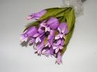 Tulipan pojedynczy liliokształtny (4)