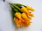 Tulipan pojedynczy liliokształtny (5)