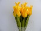 Tulipan pojedynczy liliokształtny (6)