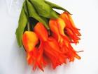 Tulipan pojedynczy liliokształtny (7)