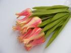 Tulipan pojedynczy liliokształtny (9)