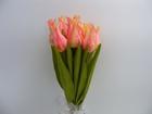 Tulipan pojedynczy liliokształtny (10)