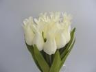 Tulipan pojedynczy liliokształtny (12)