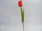 Tulipan pojedynczy (1)