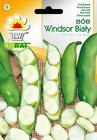 Bób Windsor biały [50g] średnio wczesny (1)