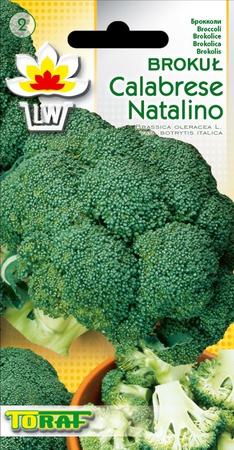 Brokuł Calabrese Natalino [1g] średnio późny (1)