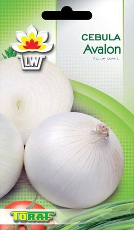 Cebula Avalon [3g] - średnio wczesna (1)