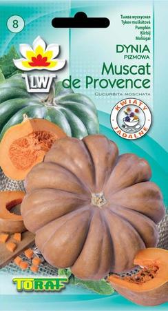 Dynia piżmowa Muscadet de Provence [3g]-późna (1)