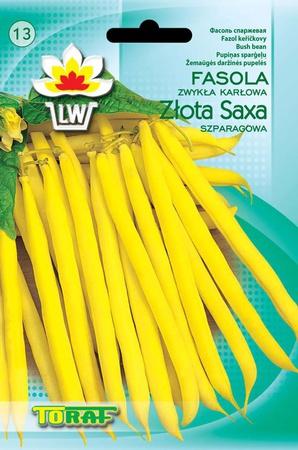 Fasola Złota Saxa [50g] wczesna, karłowa,plenna (1)