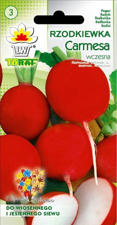 Rzodkiewka Carmesa [10g] - bardzo wczesna (1)
