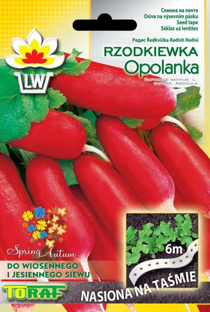 Rzodkiewka Opolanka t. 6m (1)
