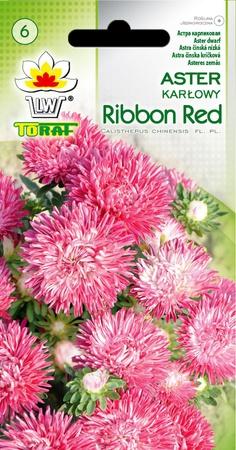 Aster karłowy Ribbon Red [0,5g] (1)