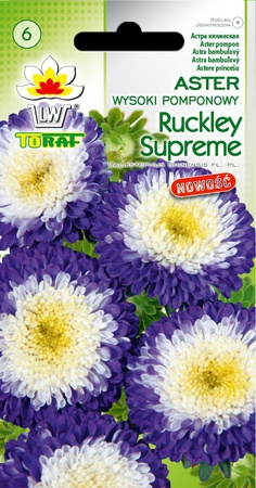 Aster pomponowy Ruckley Supreme [1g] (1)