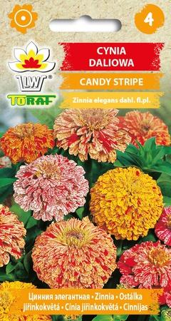 Cynia daliowa  Candy Stripe [1g] (1)