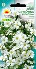 Gipsówka wytworna biała [1g] (1)