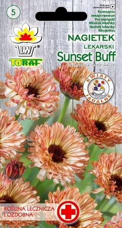 Nagietek Sunset Buff [1g] (1)
