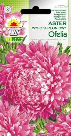 Aster peon. Ofelia różowy [1g] (1)