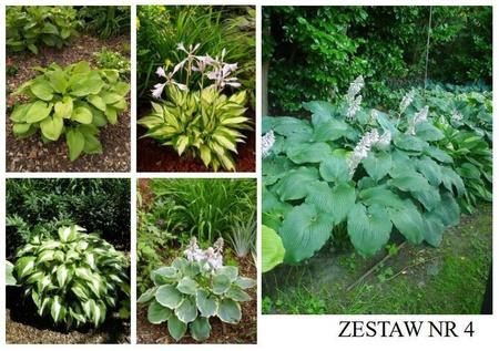 Zestaw roślin nr 4 (1)