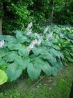 Zestaw roślin nr 4 (2)