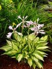 Zestaw roślin nr 4 (4)