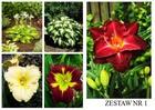 Zestaw roślin nr 1 (1)