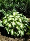 Zestaw roślin nr 1 (2)