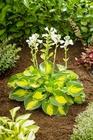Zestaw roślin nr 1 (3)