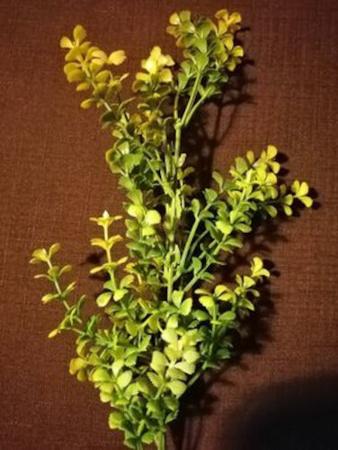 Gałązka eukaliptus flokowany ( 180-mix ) (1)